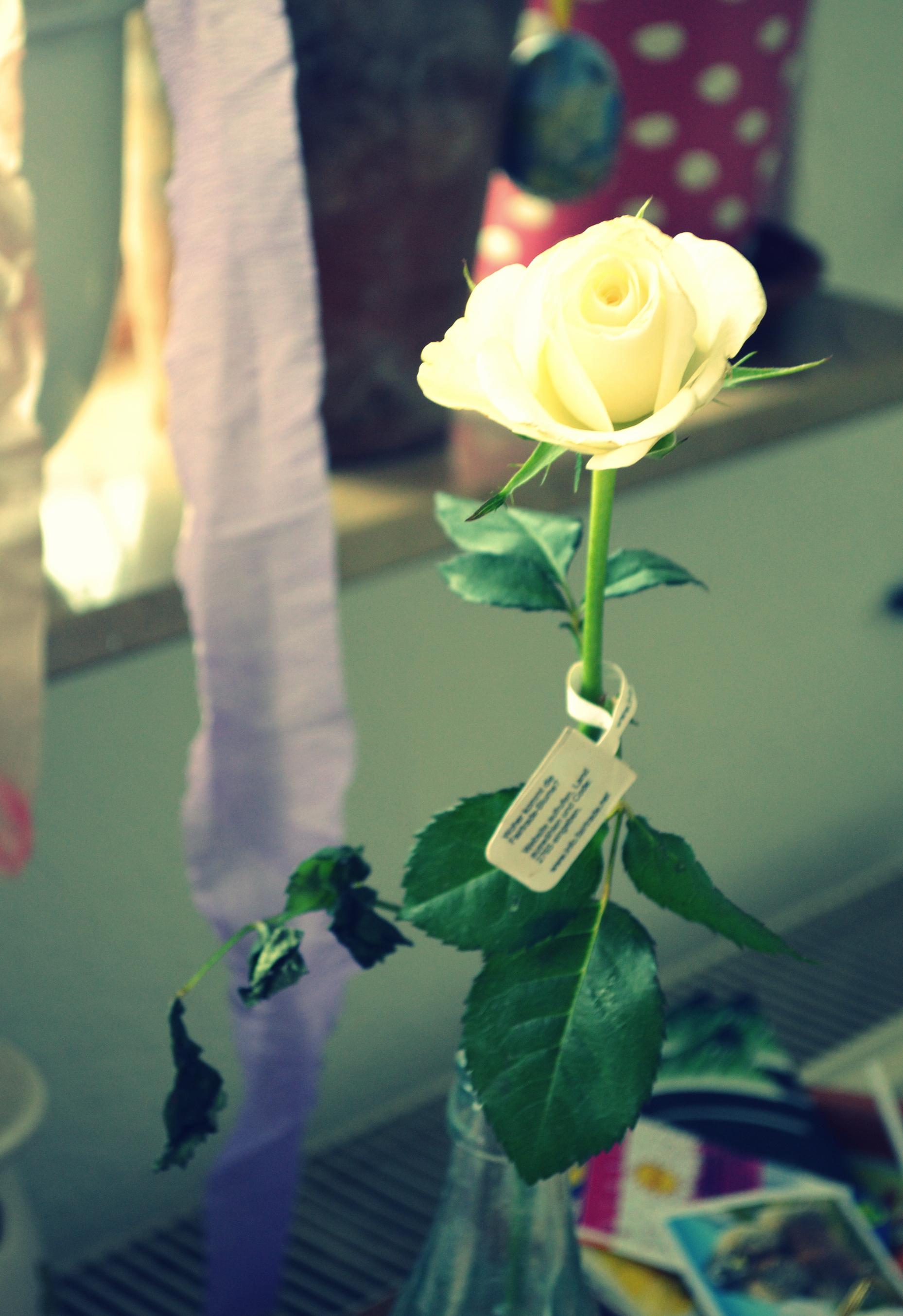 Seine Rose (übrigens Fair Trade) wanderte weiter zur Miriam...